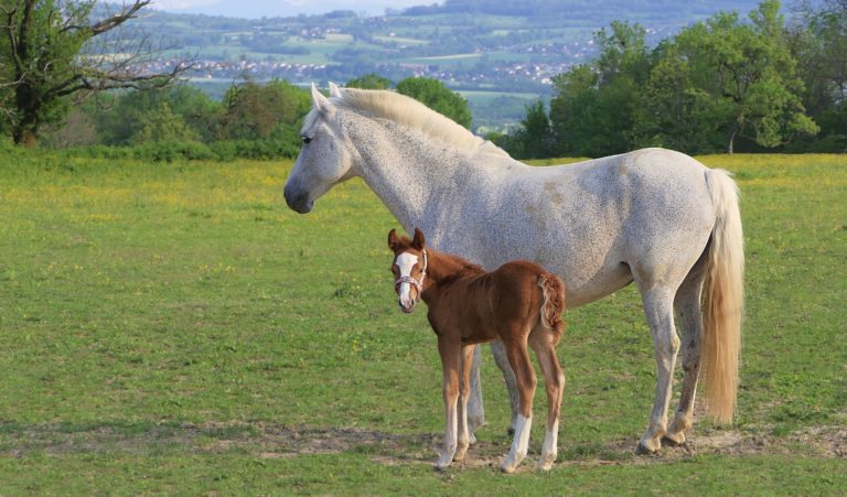 How do you value horses within your business?
